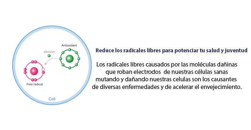 Los radicales libres causados por las moléculas dañinas  que roban electrodos  de nuestras células sanas  mutando y dañando nuestras celulas son los causantes  de diversas enfermedades y de acelerar el envejecimiento.